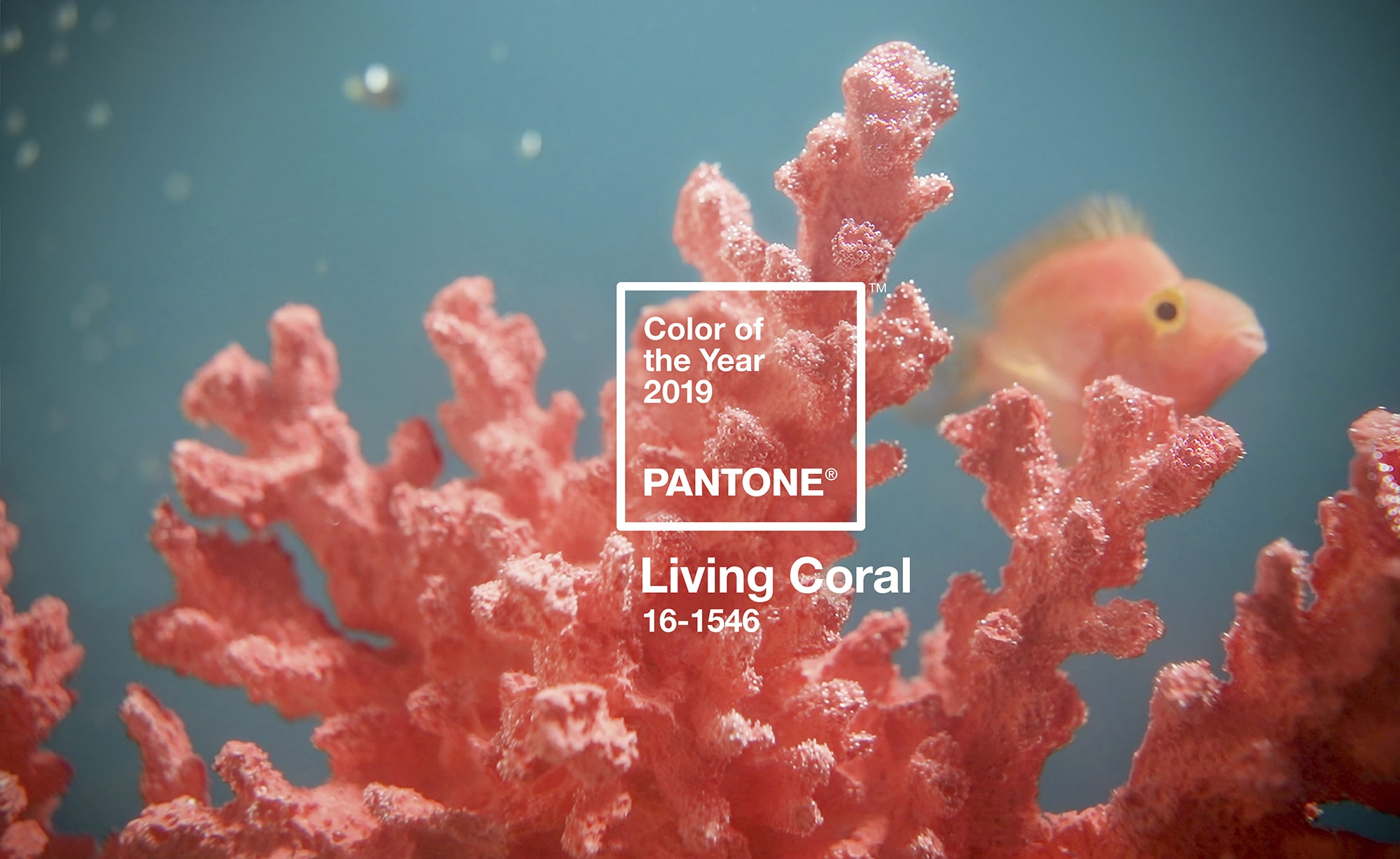 "LE ""LIVING CORAL"" ELU COULEUR 2019"